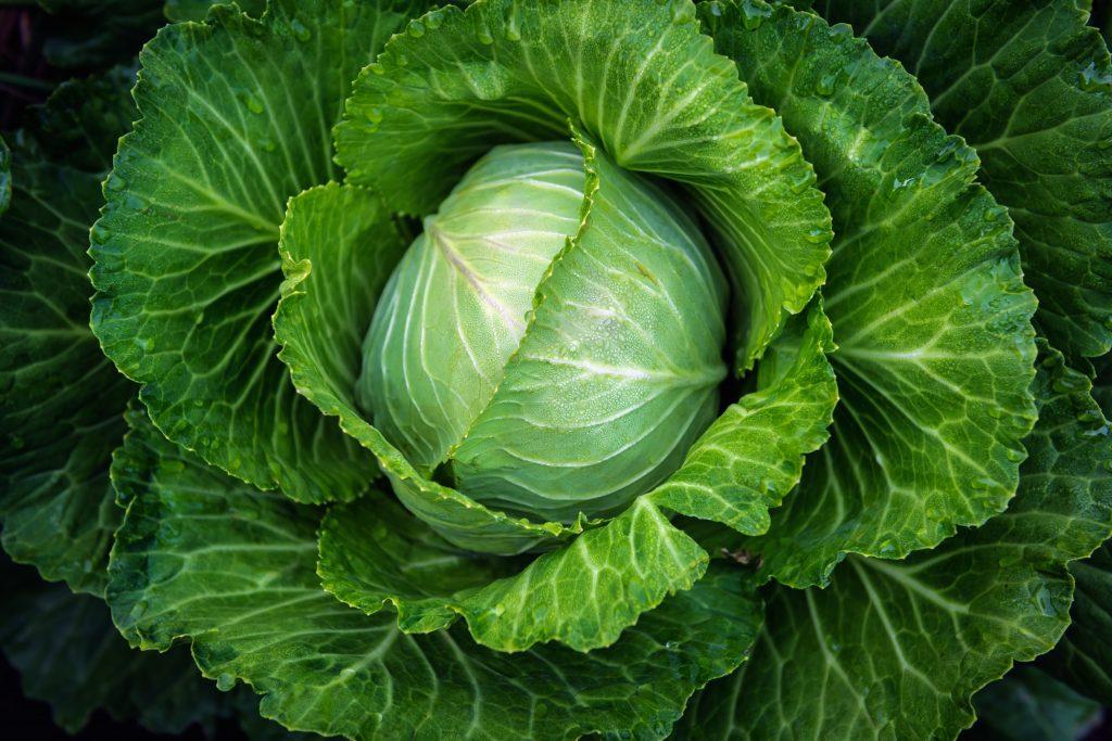 Капуста – идеальный овощ